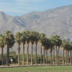 coachella valley real estate