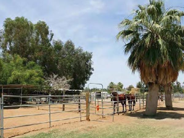 another angle of the ranch in 27.31 acres horse ranch in avenue 52 vista santa rosa california
