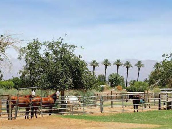 another angle of horses and the ranch of 27.31 acres horse ranch in avenue 52 vista santa rosa california