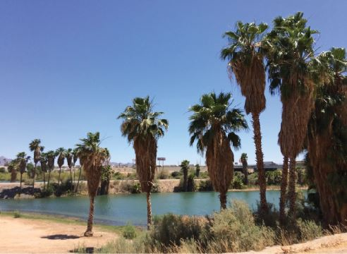 photo of trees and lake in 3.28 acres land for sale in hobson way blythe california