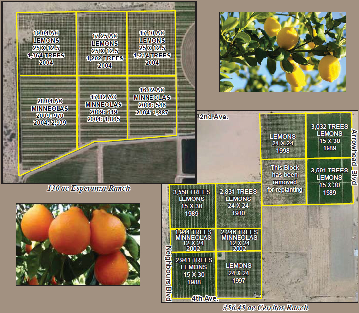 a plat map for a 486 acres farmground for sale in cerritos and esperanza ranch blythe california